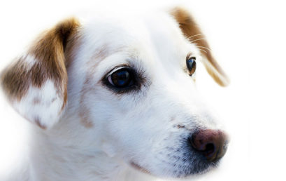 Steps For A Successful Dog Training Session